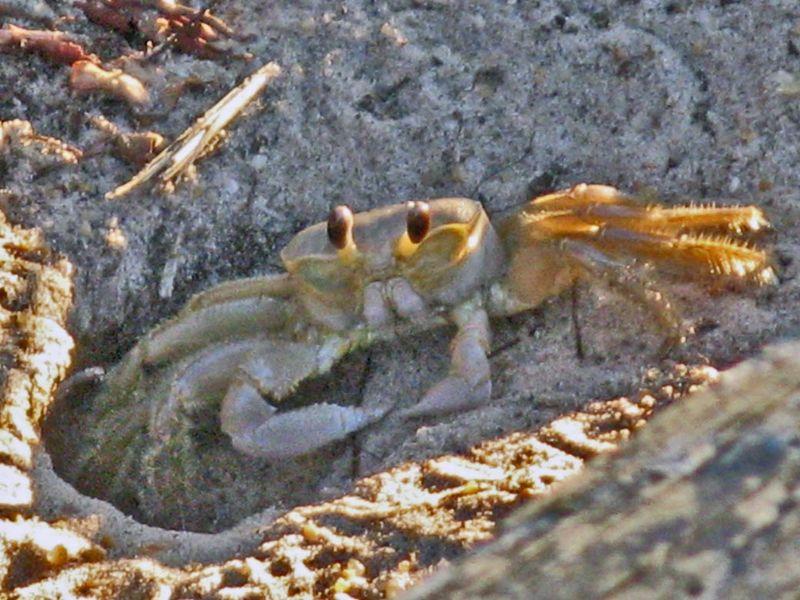 Crab blog